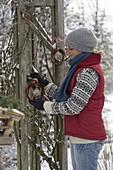 Frau hängt Meisenknödel in einem Ring von Zweigen auf