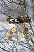 Kranz aus Cornus (Hartriegel - Zweigen) mit Tanne als Vogelfutterstation