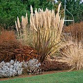 PHORMIUM,PENNISETUM ALOPECUROIDES,CORTADERIA 'PUMILA',SEDUM 'AUTUMN JOY'& 'Ruby GLOW'. THE Old VICARAGE, Norfolk