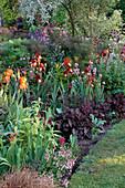 Iris 'Kent PRIDE', HEUCHERA 'RACHAEL', ERYSIMUM, AQUILEGIA & Iris 'Shampoo'. THE White HOUSE / Elisabeth WOODHOUSE