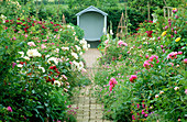 VIEW From THE SUMMER HOUSE TO A SEAT with PEONIES AND Rosa WOLLERTON Old HALL,SHROPSHIRE