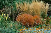MISCANTHUS SINENSIS 'HERCULES', KNIPHOFIA 'PERCY'S PRIDE, SANTOLINA PINNATA SUBSP NEOPOLITANA. RHS Garden, WISLEY