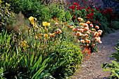 Yellow Iris, PAPAVER 'SAFFRON',Iris(UNKNOWN) & PAPAVER 'BEAUTY of Livermore'.HADSPEN HOUSE,SOMERSET.
