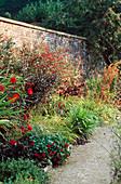 DAHLIA 'BISHOP of LLANDAFF',Tropaeolum 'Red WONDER',Fuchsia RICCARTONII, PRUNUS X CISTENA.HADSPEN HOUSE Garden,Somerset