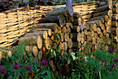 Log PILE AGAINST WATTLE FENCE IN THE AGE CONCERN Garden by CHRISTOPHER PICKARD. CHELSEA 97.