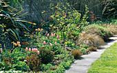 Tulipa 'Apricot Parrot' & 'Apricot BEAUTY', EUPHORBIA CHAMELEON, Carex FLAGELLIFERA & PHORMIUM TENAX. HADSPEN Garden, SOMERSET.