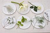 Zutaten für weißen Strauß mit Hippeastrum (Amaryllis), Rosa (Rosen)