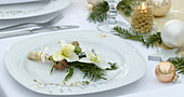 Helleborus niger 'Christmas Star Princess' (Christrosen) Blüten mit Abies