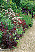 ANTHRISCUS 'RAVENSWING', AQUILEGIA 'Double Red', ATRIPLEX HORTENSIS RUBRA AND Iris 'Black SWAN'. HADSPEN GARDENS, SOMERSET.