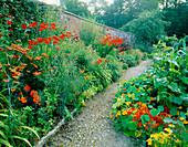 Red / Orange BORDER: Achillea 'WALTHER FUNCKE', CROCOSMIA 'LUCIFER', COLUTEA MEDIA, ASCLEPIAS TUBEROSA, ROSE 'ALTISSIMO', Tropaeolum MAJUS. HADSPEN Garden, SOMERSET.