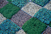 CHEQUERBOARD PATTERN CREATED by Echeveria, CREEPING Mint AND GRAVEL SQUARES. BLAKEDOWN LANDSCAPES. CHELSEA 98