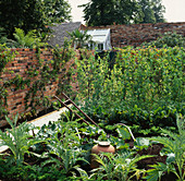 VEGETABLE Garden / POTAGER: CARDOONS, RHUBARB FORCING Pot, PEA GRADUS AND LEAN -TO GREENHOUSE. SPIRIT of HELIGAN Garden, HAMPTON Court 98