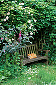 A PLACE TO SIT: CONTENTED Cat DOZES On BENCH IN SHADY Herb Garden ARBOUR OVERHUNG by CLIMBING ROSE 'New DAWN'. NETHERFIELD Herb Garden, SUFFOLK. Designer: LESLEY BREMNESS