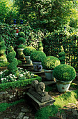 Box Garden: CONTAINERS with Box BALLS On STEPS, TOPIARY Spiral SURROUNDED by White Verbena, with Antique STONE LION IN FOREGROUND. Designer: Jonathan BAILLIE