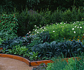 VEGETABLE Garden, Rosendal, SWEDEN: RAISED BED: BRASSICA CAVALO Nero,ZINNIA ELEGANS,SAVOY CABBAGE, COSMOS 'PURITY', SORREL, BRUSSEL SPROUTS 'FALLSTAFF' & KALE 'VATES Blue CURLED'