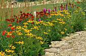 New PRAIRIE PLANTING: RUDBECKIA FULGIDA Var DEAMII, HELENIUM 'MOERHEIM BEAUTY', LIATRIS Spicata AND LIATRIS Spicata 'Alba', CALAMAGROSTIS X ACUTIFLORA 'Karl FOERSTER. Lady Farm