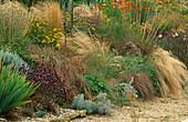Steppe PLANTING: STIPA GIGANTEA, STIPA TENUISSIMA, Origanum 'HERRENHAUSEN', Carex FLAGELLIFERA, Artemisia CANESCENS, Achillea 'Moonshine'. Lady Farm, Somerset