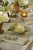 Herbstliche Amaryllis - Tischdeko