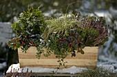 Holz-Blumenkasten mit Winterbepflanzung