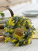 Duftener Kranz aus Acacia (Mimosen), Cineraria maritima (Silberblatt)