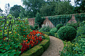 ANTIRHINUMS, CLIPPED Box MOPHEADS AND RUNNER Beans IN THE WALLED Garden at West Green HOUSE, Hampshire