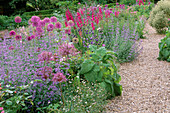 ALLIUM AFLATUNENSE 'Purple Sensation' , Nepeta 'Six HILLS GIANT', ALLIUM CHRISTOPHII AND GLADIOLUS COMMUNIS BYZANTINUS.