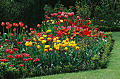 Mixed BORDER of TULIPS PLANTED with ROSES AND SURROUNDED by BUXUS SEMPERVIRENS. THE ABBEY HOUSE, WILTSHIRE.
