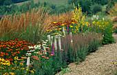 PRAIRIE PLANTING at Lady Farm: LIATRIS Spicata 'Alba', HELENIUM 'MOERHEIM BEAUTY', Echinacea PURPUREA 'White SWAN', CALAMAGROSTIS 'Karl FOERSTER' AND RUDBECKIA 'Goldsturm'