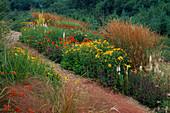 PRAIRIE PLANTING at Lady Farm: LIATRIS Spicata 'Alba', HELENIUM 'MOERHEIM BEAUTY', CALAMAGROSTIS 'Karl FOERSTER', Verbascum OLYMPICUM, Achillea 'Coronation Gold' AND CROCOSMIA
