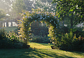EARLY MORNING Sun SHINES On A Pergola COVERED with RAMBLING Rosa 'GOLDFINCH'. NYEWOOD HOUSE, West SUSSEX..