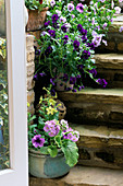 VIEW OUT of THE KITCHEN DOOR TO STEPS with GROUP of POTS PLANTED with PANSIES, NICOTIANA 'Lime Green' AND PRIMULAS. LISETTE PLEASANCE'S London Garden
