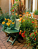 A PLACE TO SIT: Green WOODEN CHAIR with CONTAINERS On THE TERRACOTTA Patio PLANTED with Cordyline AND DAHLIA 'Garden Party' AND 'SO DAINTY'. TO THE LEFT IS FICUS 'BROWN TURKEY'.