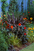 LATE SUMMER BORDER BACKED by Blue FENCE with Bronze PHORMIUM, DAHLIA 'ELLEN HOUSTON', Carex ELATA 'AUREA', CROCOSMIA 'EMBER GLOW' AND RUDBECKIA 'RUSTIC DWARF'. THE NICHOLS Garden
