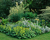AQUILEGIAS, STACHYS, ALCHEMILLA MOLLIS, PHALARIS ARUNDINACEA, HOSTAS, CORNUS ALTERNIFOLIA 'ARGENTEA'. THE White HOUSE, Sussex