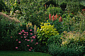 LAUNA SLATTER'S Garden, OXON: Pink AND Yellow BORDER with LUPINS, HOP AND TANACETUM COCCINEUM 'BRENDA' AND IVY
