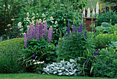 LAUNA SLATTER'S Garden, OXON: BORDER with STACHYS, ACONITUM, Lupinus AND CENTRANTHUS