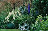LAUNA SLATTER'S Garden, OXON: BORDER with Lupinus ARBOREUS, ONOPORDUM, Dianthus, TAMARISK AND Delphinium