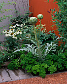 City ROOF TERRACE Garden with Cynara SCOLYMUS 'Green GLOBE', PARSLEY, Lathyrus ODORATUS 'Black KNIGHT' AND Echinacea 'White SWAN'. HEDENS LUSTGARD, SWEDEN