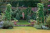City KITCHEN Garden with Urn, Metal ARCH AND ENTRANCE FLANKED by TWO BERLOTTI Lingua Di FUOCO BEAN PLANTS On STICKS