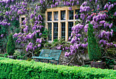 WISTERIA SINENSIS AND Lonicera X AMERICANA On THE Front of THE HOUSE. EASTLEACH HOUSE, GLOUCS