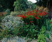 THE RILL Garden at EASTLEACH HOUSE, GLOUCS: ALLIUM SPHAEROCEPHALON, CROCOSMIA 'LUCIFER', Artemisia LACTIFLORA 'GUIZHO', ERYNGIUM, BERGENIA