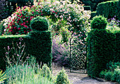 EASTLEACH HOUSE Garden, Gloucestershire: ROSE ARCHES SEEN THROUGH YEW HEDGES AND GATES - ROSES 'ETHEL' AND 'Bleu Magenta'