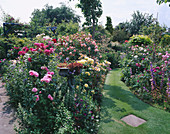 A GRASS PATH CUTS BETWEEN BORDERS of English ROSES IN CAROLYN HUBBLE'S Garden, SHROPSHIRE