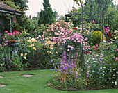 LAWN AND BORDERS IN CAROLYN HUBBLE'S Garden, SHROPSHIRE: ROSES INCLUDING THE WEEPING STANDARD ROSE 'PAUL TRANSON' AND THE Pink ROSE 'FLOWER CARPET'