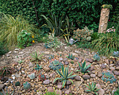 Red GABLES, WORCESTERSHIRE: THE COBBLED Garden with AGAVES AND ECHEVERIAS