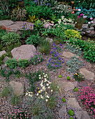ROCKS, GRAVEL AND ALPINE PLANTS by THE ALPINE Garden SOCIETY, CHELSEA