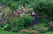 LAUNA SLATTERS Garden, OXFORDSHIRE: Delphinium, THALICTRUM AQUILEGIFOLIUM, ROSE 'GERTRUDE JEKYLL', PHUOPSIS STYLOSA AND ALLIUM CHRISTOPHII