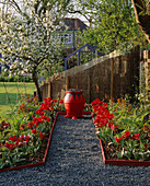 Red Garden: Black GLASS PATH with Tulipa Rococo, EUPHORBIA 'FIREGLOW', Red AND Black Pot with OPHIOPOGON PLANISCAPUS 'NIGRESCENS', Blue Greenhouse AND A Cox Apple TREE