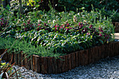 CHELSEA 2001: THE Garden of EDEN: RAISED BED with FLAX, Coffee, IMPATIENS, COTTON AND Tea