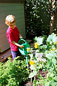 OLLIE WATERING SUNFLOWERS IN THE DECORATIVE CHILDRENS POTAGER DESIGNED by Clare MATTHEWS